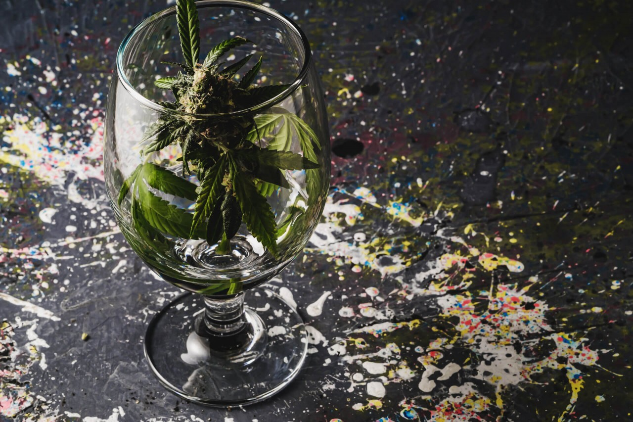 cannabis-w-winach